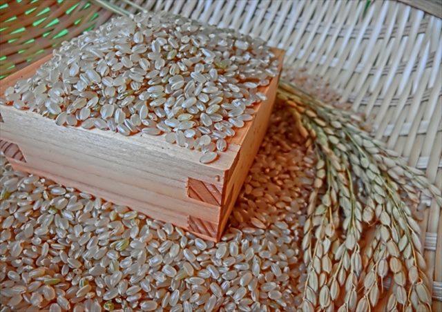 コシヒカリのおいしさを保ったままお届けしたい!出荷ギリギリまで玄米で保存!